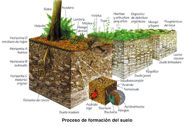Ud08 procesos geol gicos externos biolog a y geolog a for Proceso de formacion del suelo