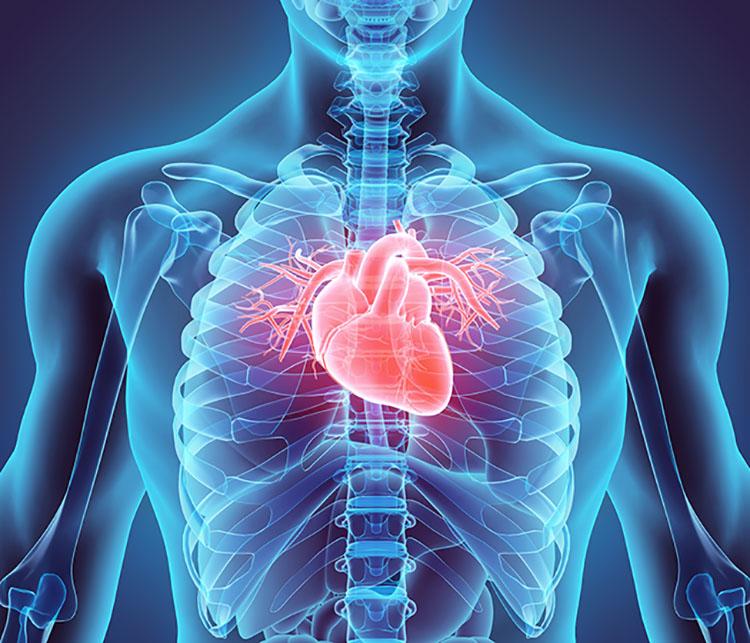 Circuito Circulatorio : Ud anatomÍa y fisiologÍa del aparato circulatorio biologÍa y